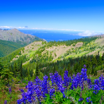Hurricane ridge at Olympic national park