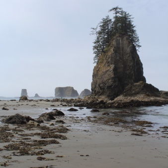 3rd beach at Olympic national park
