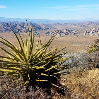 Top of Mt. Ryan at Joshua tree