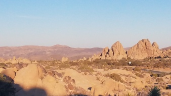 Joshua tree. View from Mt. Ryan.