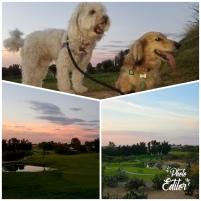 The doggies.