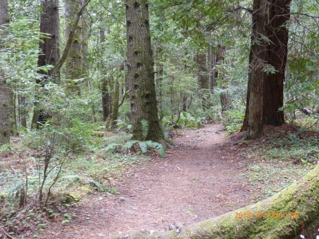 thick forest in Jug handle reserve state park.