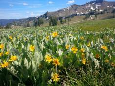 squaw valley in spring